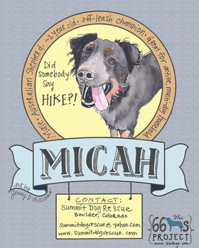 Watercolor dog portrait: Micah